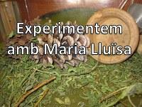 Experimentem amb Maria Lluïsa