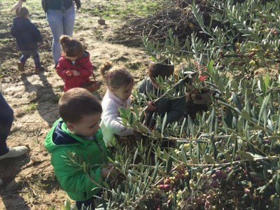 Sortim a l´hort a buscar carabasses i olives.
